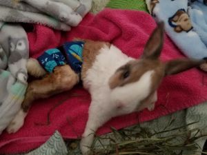Bunny Diapers, Rabbit Diapers, Bunny Nappies, Rabbit Nappies